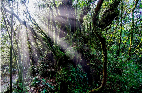 Mossy forest - photography workshop at Cameron highland