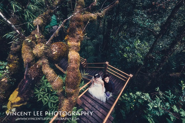 cameron highland pre wedding