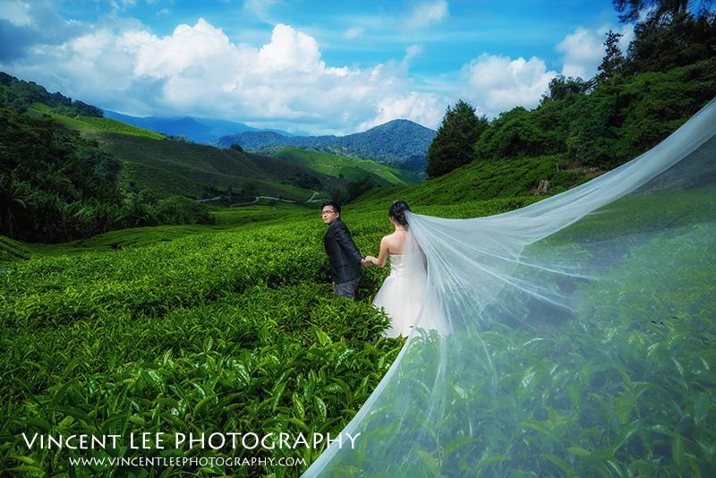 cameron highland pre wedding